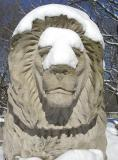 lion full front copy.jpg