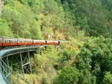 Jungle train