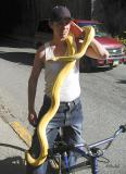 There are Snakes in Alaska!