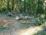 along Ransier Drive - bits of the neighbor's tree across the street