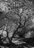 Nature's Canvas