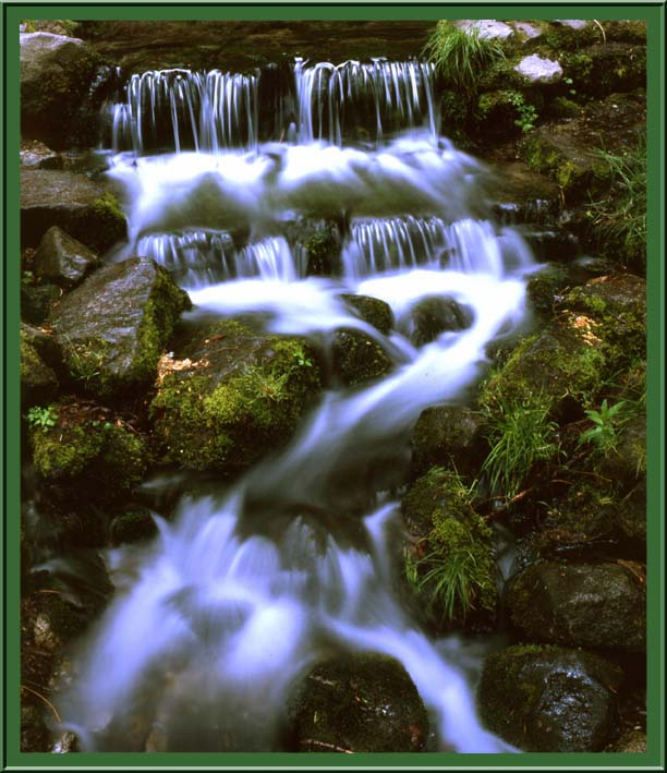 Fern Spring, Yosemite, California, USA