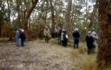 The group in a dry eucalyptus grove