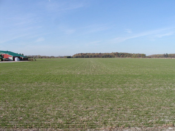 Wheat up after planting.JPG