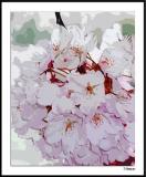 Blossom Cluster B010408_021a3awF.jpg