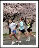 Cherry Blossom 10 Mile 4-4-2004 240a1awF.jpg