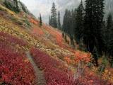 Trail amid Autumn Color