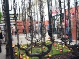 including demonstrations of fruit trees