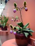 and exotic potted plants