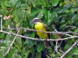 Small bird / Pequeña ave