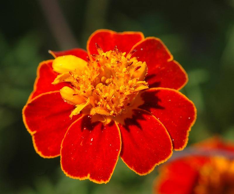 Flower close