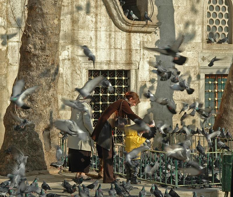 Feeding pigeons at Eyup Mosque