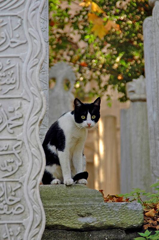 Night Watchman, Ottoman cemetery