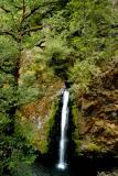 Drift Creek Trail