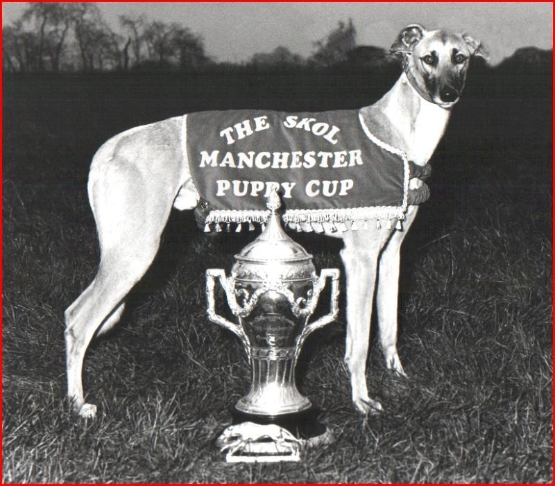 Winning  greyhound.