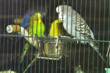 Observant Birds