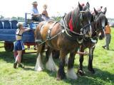 Shire Horses, Tye & Ryan.JPG (1141)
