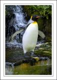 Another penguin ~ Birdland, Bourton-on-the-Water