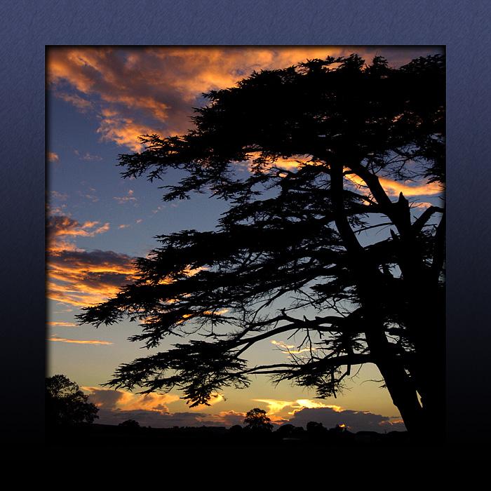 Another cedar sunset! (3049