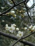 The Start of Spring