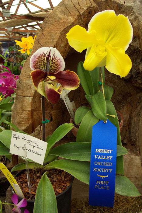 First Place, Desert Valley Orchid Society