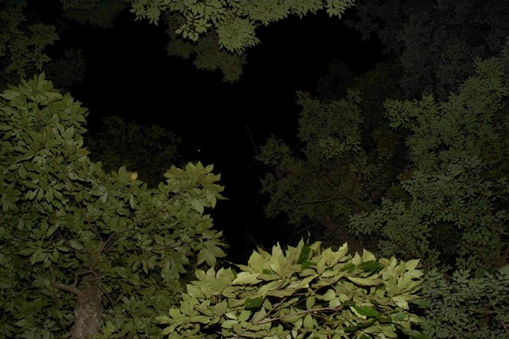 Trees at Night.jpg
