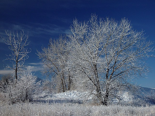 <font size=+1>Winter Trees<font size=-2><br>by<br>Lisa Young