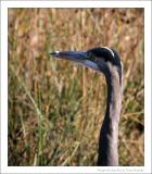 GREAT BLUE HERON RESERVE