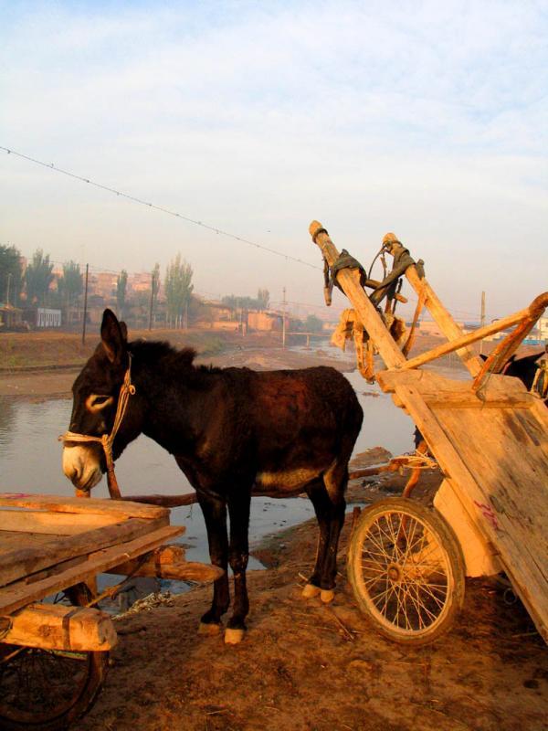 Donkey and kart