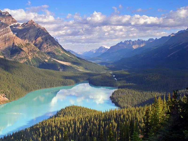 Peyto Lake/Bow Summit II