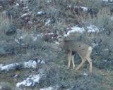 Mule Deer seen from the Land DSC_1321.jpg