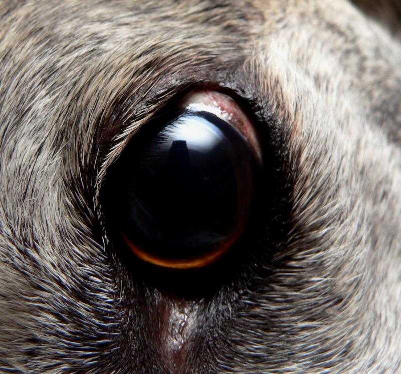 Macro of Romans eyeball