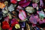 Bear Creek Leaves