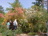 R. austrinum, R. flammeum, R. canescens, Diane Hayes, John Brown