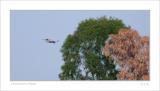 small DSC_9262 twins tree.jpg