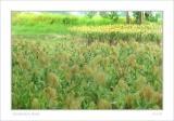 small DSC_9270 field 01.jpg