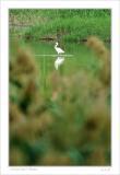 small DSC_9277 bird 02.jpg
