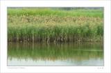 small DSC_9283 grass 01.jpg
