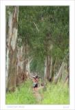 small DSC_9296 forest man 01.jpg