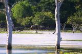 Asian Elephants.jpg