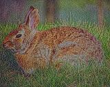 bunny1 (Photoshop with Adaptive Equalization filter)