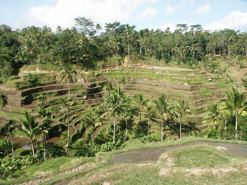 a bali rice terrace