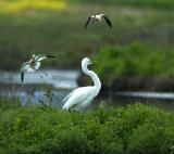attack_of_the_egret