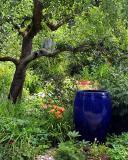 Molly Ward Gardens-Seattle