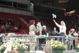 A Finnish Maine Coon wins the semilong hair adult category - Suomalaisten juhlaa kakkoskategoriassa.