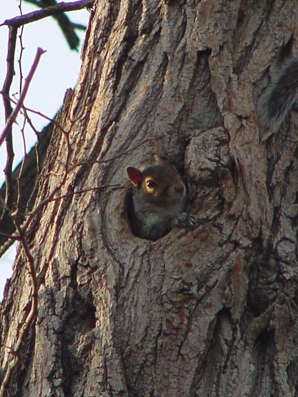 squirrelkid2.jpg