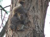squirrelkids.jpg