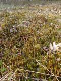 moss flower3.jpg