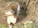 Brother, Could You Spare a Nut?