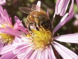 Meet The Pollinator